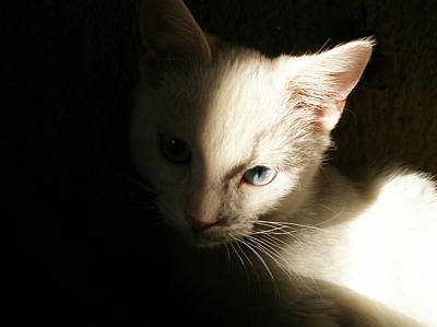 Photograph - Cat Portrait by Zsuzsa Balla