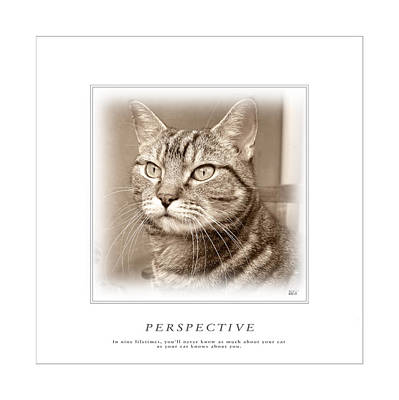 Photograph - Cat Reflections 1 by Helene U Taylor