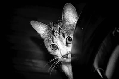 Photograph - Cat by Robert Knight