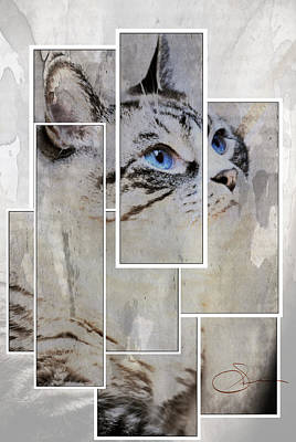 Fur Digital Art - Cat by Robert Smith