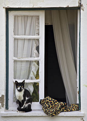 Cat Sitting On The Ledge Of An Open Wood Window Art Print by David Letts