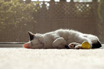 Monochrome Landscapes - Cat Sleeping in the Sunshine by Lee Serenethos