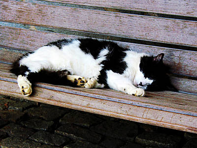 Photograph - Cat Sleeping On Bench by Susan Savad