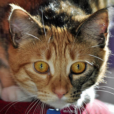 Photograph - Cat Stare Down by Tikvah's Hope