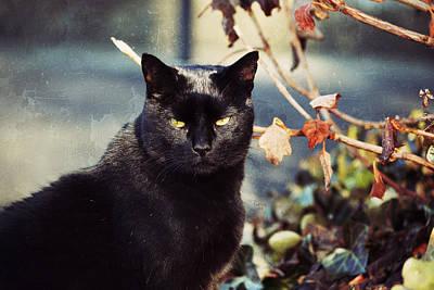 Kittens Mixed Media - Cat Stevens by Trish Tritz