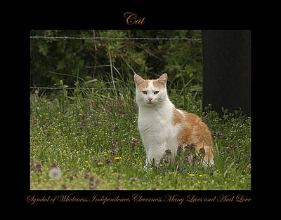 Photograph - Cat Symbol Of by Marty Maynard