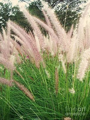 Floral Photograph - Cat Tails by Eric  Schiabor