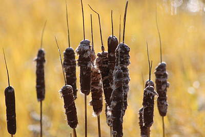 Cat Tails In November Art Print