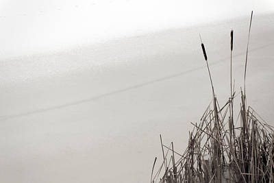 Photograph - Cat Tails In Winter by Jim Vance