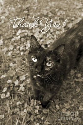 Photograph - Cat Thank You Cards by Chris Scroggins