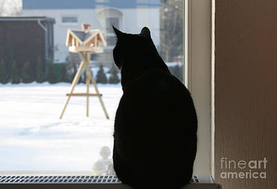 Photograph - Cat Tv by Art Photography