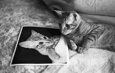 Cat Vanity Art Print