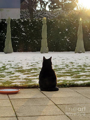 Photograph - Cat Waiting For Spring by Art Photography