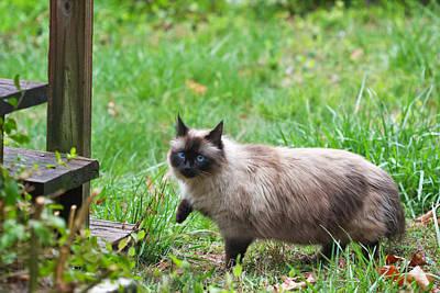 Fleetwood Mac - Cat Walking by Melinda Fawver