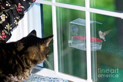 Photograph - Cat Watching Hummingbird by Jim Zipp
