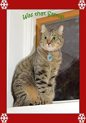 Photograph - Cat Who Saw Santa by Susan Leggett
