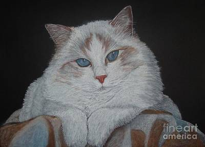 Ragdoll Cat With Blanket Original by Cybele Chaves