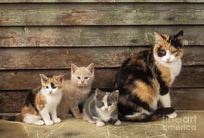 Cat With Kittens Art Print by John Daniels