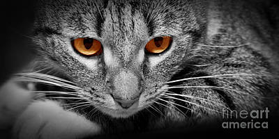 Playful Photograph - Cat With Scary Red Glowing Eyes by Michal Bednarek
