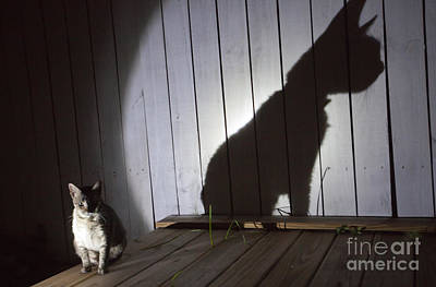 Photograph - Cat With Shadow by Julie Dermansky