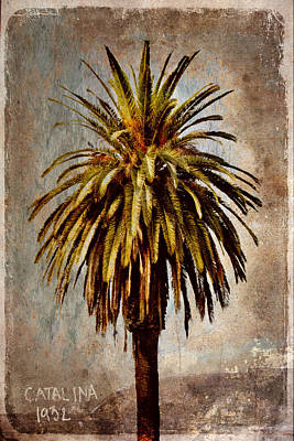 Palm Trees Photograph - Catalina 1932 Postcard by Carol Leigh