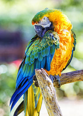 Macaw Digital Art - Catalina Macaw by Bill Tiepelman