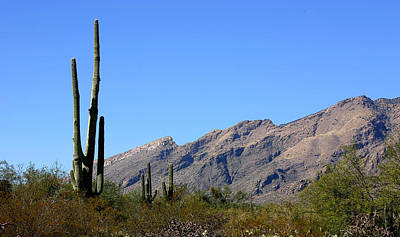 Photograph - Catalinas by Joe Kozlowski