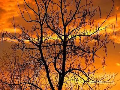 Photograph - Catalpa Orange by Fred  Sheridan