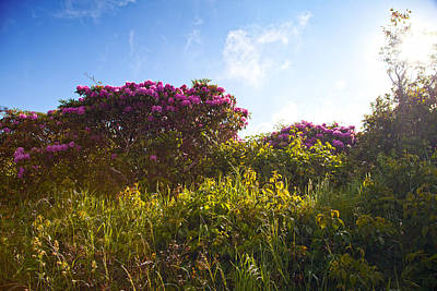 Photograph - Catawba Rhododendron by Melinda Fawver