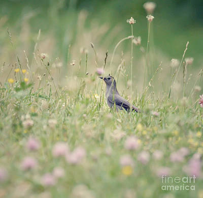 Photograph - Catbird In The Wildflowers by Kerri Farley