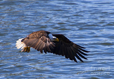 National Symbol Photograph - Catch In Hand by Mike  Dawson