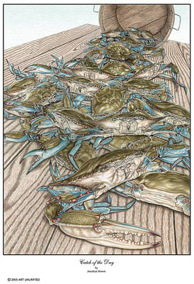 Blue Crab Drawing - Catch Of The Day by Jonathan W Brown