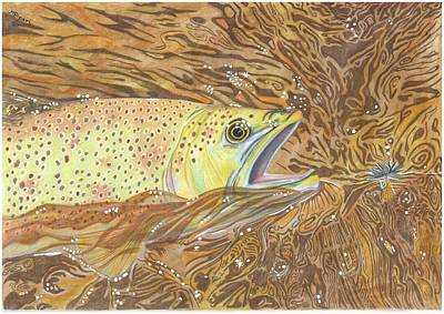 Brown Trout Drawing - Catch Of The Day by Michelle Ripari