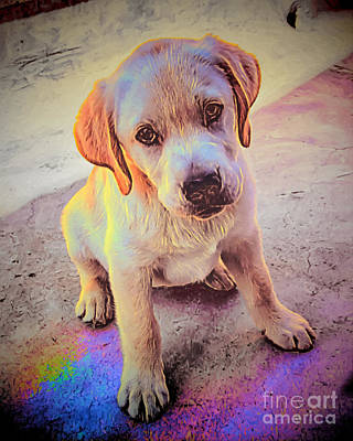 Gold Labrador Painting - Catch The Rainbow by GabeZ Art