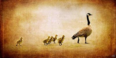 Baby Geese Wall Art - Photograph - Catch Up Little Gosling by Lisa Knechtel