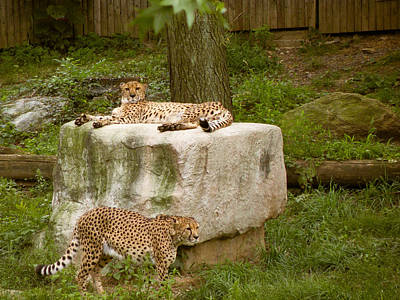 Photograph - Catching A Spotted Tan by Trish Tritz