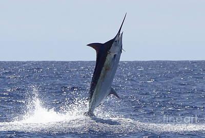 Sports Fish Photograph - Catching Air by Carol Lynne