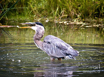 Photograph - Catching Fish by Cheryl Baxter