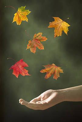 Catching Leaves Print by Amanda Elwell