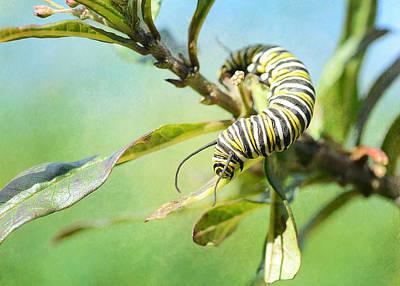 Photograph - Caterpillar Curves by Fraida Gutovich