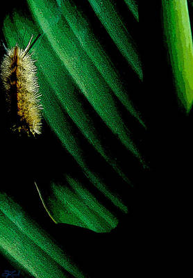 Photograph - Caterpillar On Plant by Jon Lord