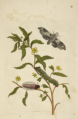 Caterpillars Feeding Print by British Library