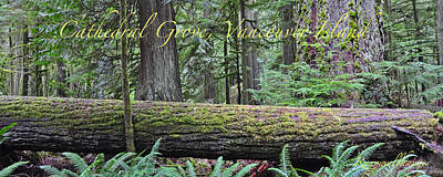 Photograph - Cathedral Grove Panoramic by Roxy Hurtubise
