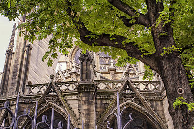 Photograph - Cathedral Tree by Georgia Fowler