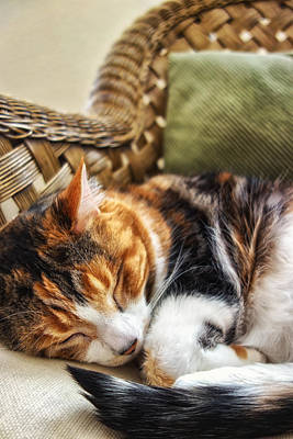 Photograph - Catnap by Anthony Citro