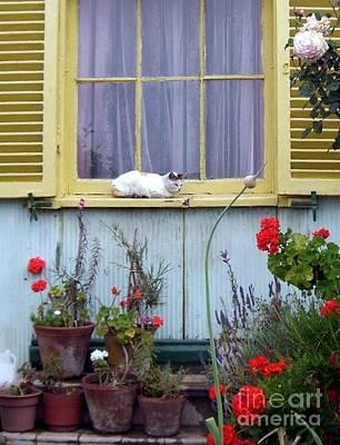 Photograph - Catnap by Barbie Corbett-Newmin