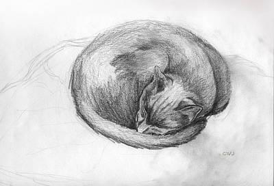 Drawing - Catnap by Cynda Warren Joyce