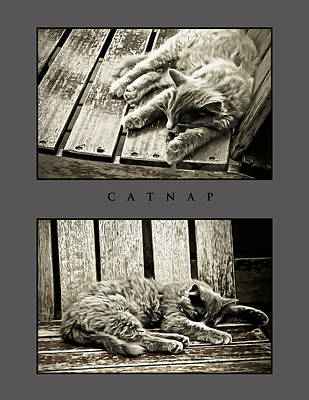 Photograph - Catnap by Greg Jackson