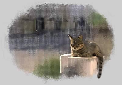 Catnap Art Print by Usha Shantharam