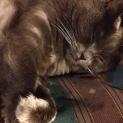 Cats Photograph - Catnap....good Night World:) #cat by Joann Vitali